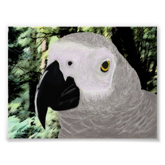 African Grey Poster