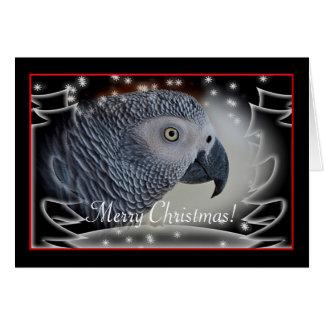 African Grey Snowy Christmas Card