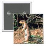 African Ground Squirrel Pinback Button