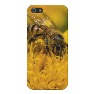African Honey Bee With Pollen Sacs Feeding iPhone 5 Case