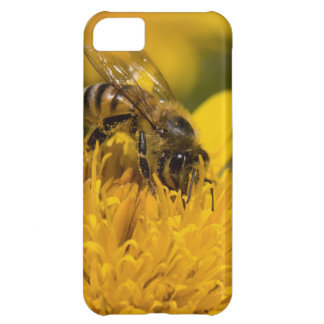 African Honey Bee With Pollen Sacs Feeding iPhone 5C Case