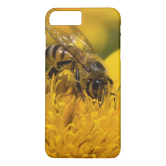 African Honey Bee With Pollen Sacs Feeding iPhone 8 Plus/7 Plus Case
