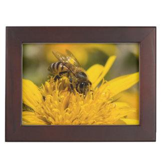 African Honey Bee With Pollen Sacs Feeding Keepsake Box