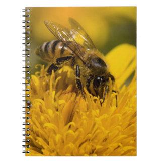 African Honey Bee With Pollen Sacs Feeding Spiral Notebook