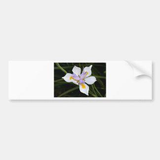African iris flower in bloom bumper stickers