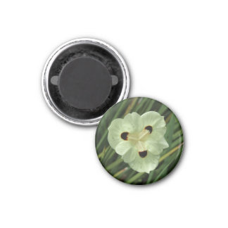 African Iris Magnet