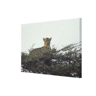 African leopard canvas print