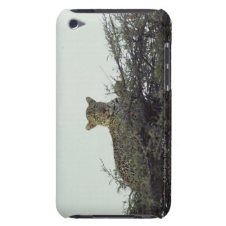 African leopard iPod Case-Mate cases