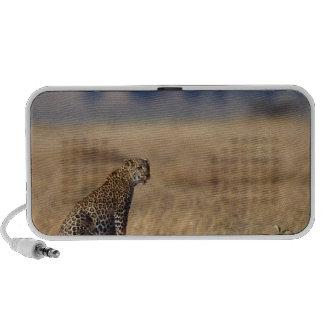 African leopard in grasslands , Kenya , Africa Speakers