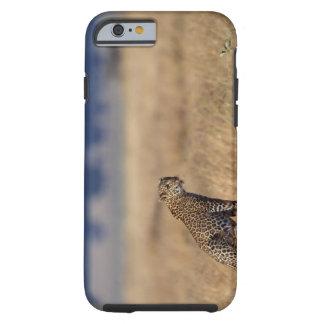 African leopard in grasslands , Kenya , Africa Tough iPhone 6 Case