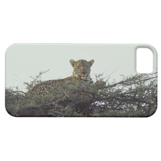 African leopard iPhone 5 cover