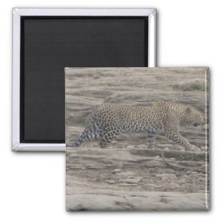 African Leopard Square Magnet