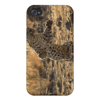 African leopard on hind legs , Namibia , Africa Case For iPhone 4