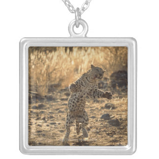 African leopard on hind legs , Namibia , Africa Silver Plated Necklace