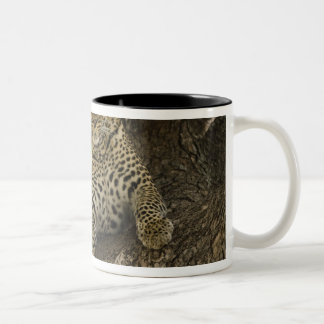 African Leopard, Panthera pardus, in a tree in Two-Tone Coffee Mug