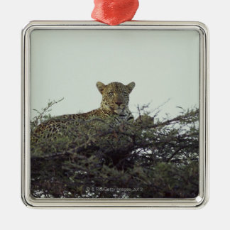 African leopard Silver-Colored square decoration