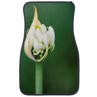 African Lily, Agapanthus Praecox, Cape Town Car Mat