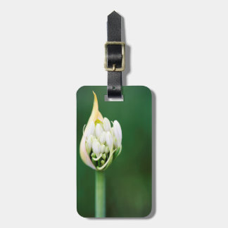 African Lily, Agapanthus Praecox, Cape Town Luggage Tag