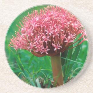 African Lily (Agapanthus Praecox), Mala Mala Coaster