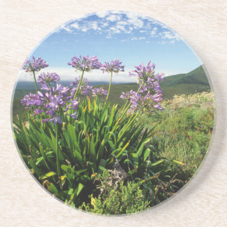 African Lily (Agapanthus praecox), Mossel Bay Beverage Coasters