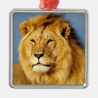 African Lion 2 Silver-Colored Square Decoration
