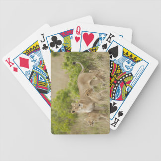 African Lion adult female with cubs, alert Bicycle Playing Cards