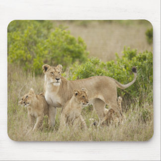 African Lion adult female with cubs, alert Mouse Mat