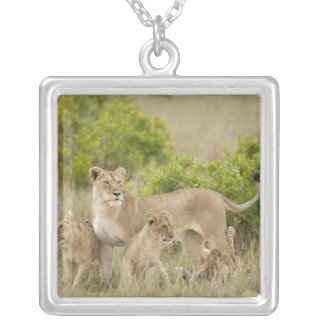 African Lion adult female with cubs, alert Silver Plated Necklace