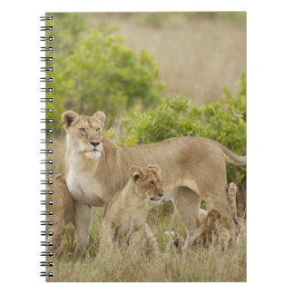 African Lion adult female with cubs, alert Spiral Notebook