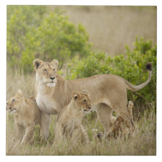 African Lion adult female with cubs, alert Tile