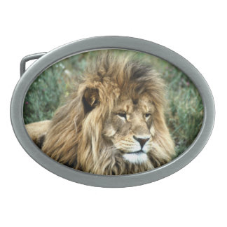 African lion belt buckles