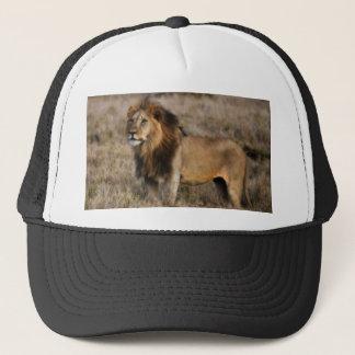 African Lion in Grass Cap