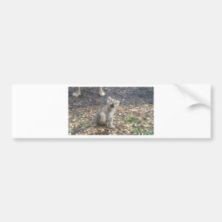 African lion kid bumper sticker