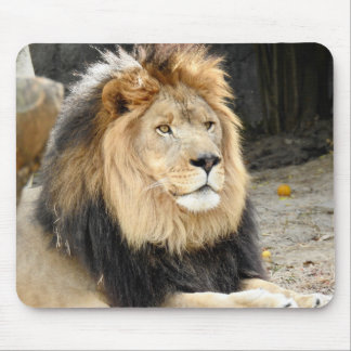 African Lion Mouse Mat