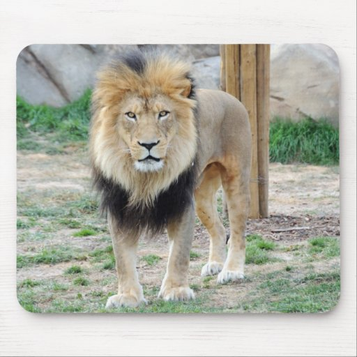 African Lion Mousepads