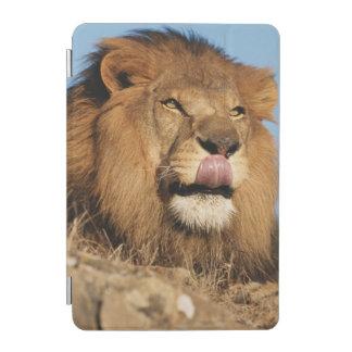 African Lion (Panthera Leo), African savannah iPad Mini Cover
