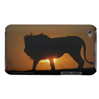 African lion (Panthera leo) against sunset, Case-Mate iPod Touch Case