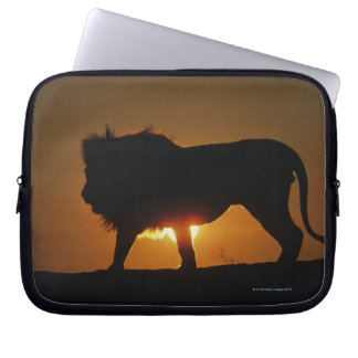 African lion (Panthera leo) against sunset, Computer Sleeves
