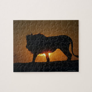 African lion (Panthera leo) against sunset, Jigsaw Puzzle
