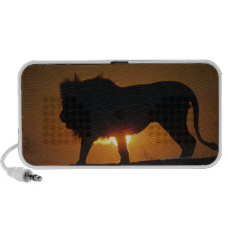 African lion (Panthera leo) against sunset, Laptop Speakers