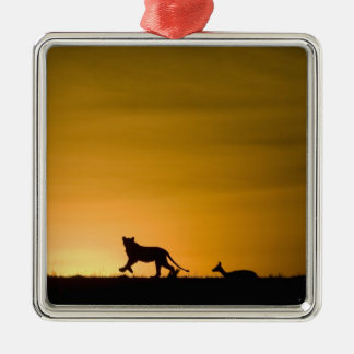African Lion, Panthera leo, chasing gazelle Silver-Colored Square Decoration