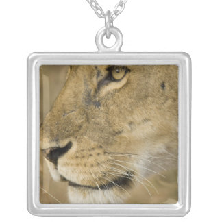 African Lion, Panthera leo, close up portrait Silver Plated Necklace