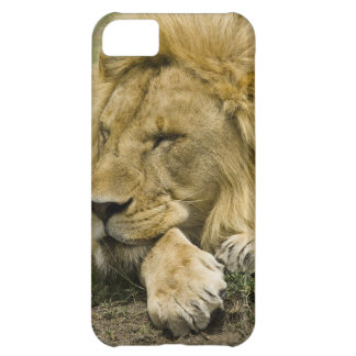 African Lion, Panthera leo, laying down asleep iPhone 5C Case