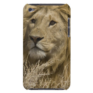 African Lion, Panthera leo, Portrait of a Barely There iPod Covers