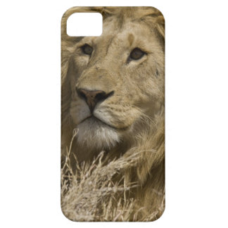 African Lion, Panthera leo, Portrait of a Case For The iPhone 5