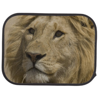 African Lion, Panthera leo, Portrait of a Floor Mat