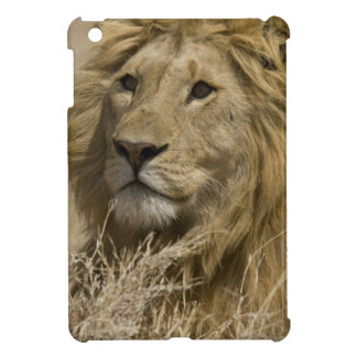 African Lion, Panthera leo, Portrait of a iPad Mini Cover