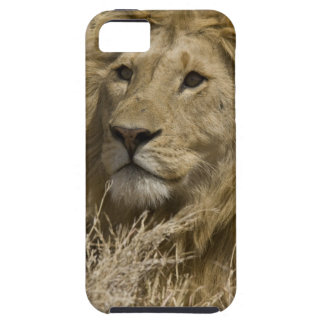 African Lion, Panthera leo, Portrait of a iPhone 5 Cases