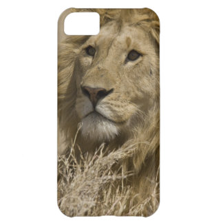 African Lion, Panthera leo, Portrait of a iPhone 5C Case
