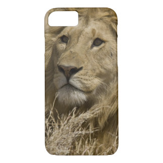 African Lion, Panthera leo, Portrait of a iPhone 8/7 Case